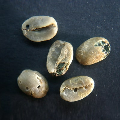 Insect Damaged Coffee Bean